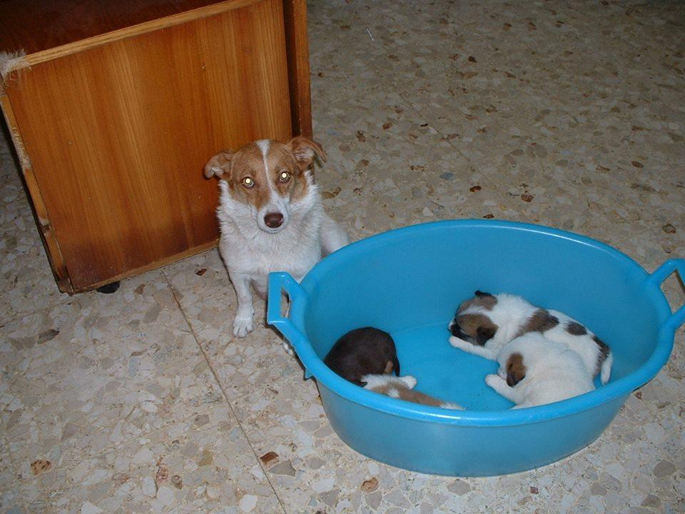 Mamma e cuccioli abbandonati